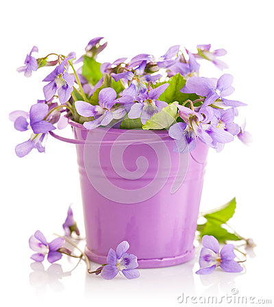 Free Spring Flower Violets With Leaf In Little Bucket Royalty Free Stock Photos - 30621748