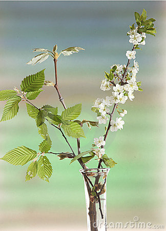 Spring flowering branches