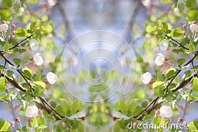 Spring Flowering Crab Apple (creative composite)