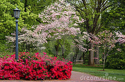 Spring flowering Dogwood and Azaleas