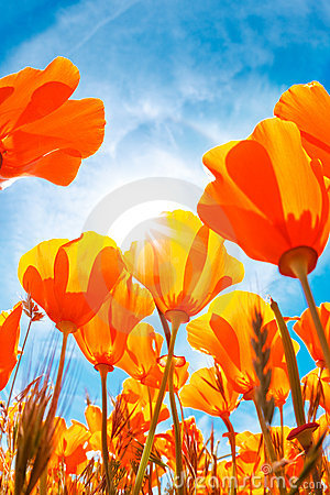 Free Spring Flowers Stock Images - 14256674