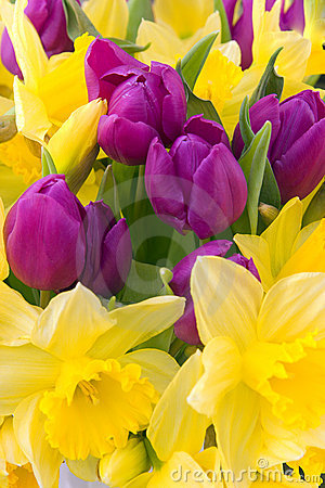 Free Spring Flowers Royalty Free Stock Photography - 2082807