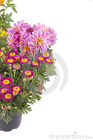 Free Spring Flowers Royalty Free Stock Image - 23748566