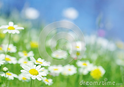 Spring flowers green background