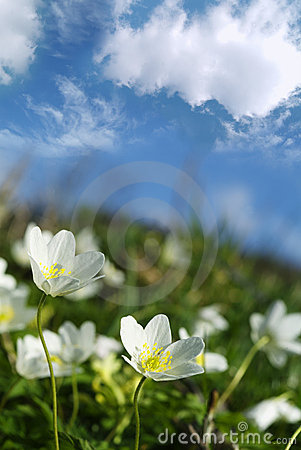 Free Spring Flowers Stock Image - 793501