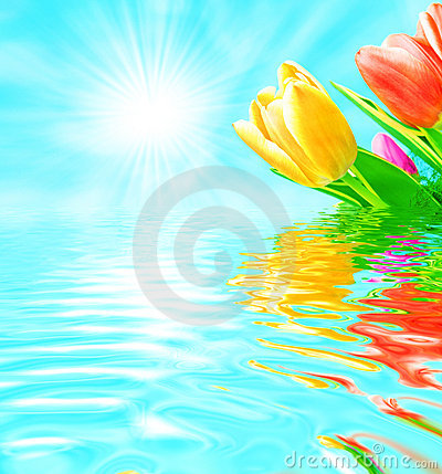 Free Spring Flowers Stock Photography - 8401532