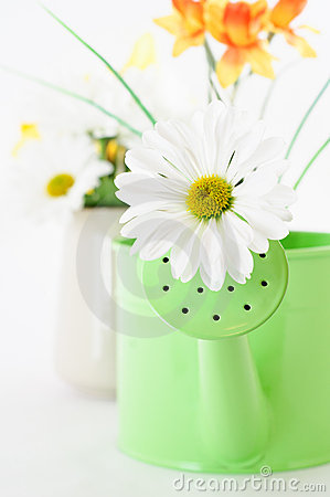 Free Spring Flowers And Watering Can Royalty Free Stock Images - 18973159