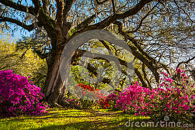 Spring Flowers Bloom at Charleston South Carolina Plantation Stock Photo