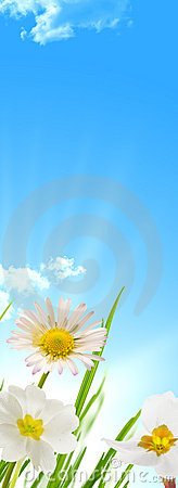 Free Spring Flowers Blue Sky And Sun Background Royalty Free Stock Photos - 13277888