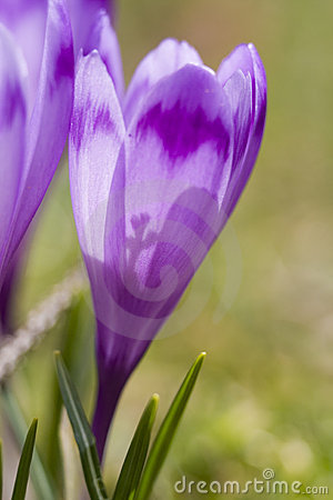 Spring Flowers Close-up And Blur Royalty Free Stock Image - Image: 4137966