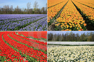 Spring flowers collage. Dutch landscape.