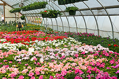 Spring flowers in greenhouse