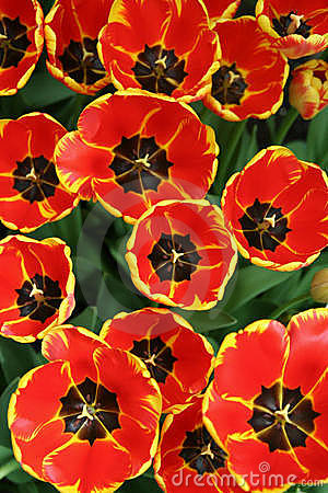 Free Spring Flowers In The Garden 1 Royalty Free Stock Photography - 691527