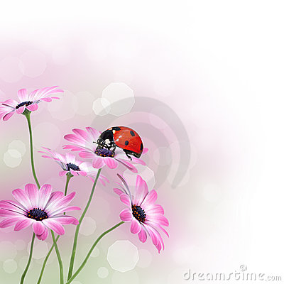 Spring flowers with ladybird