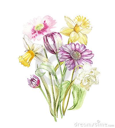 Spring flowers narcissus and tulip, Gerbera isolated on white background. Watercolor hand drawn illustration. Cartoon Illustration