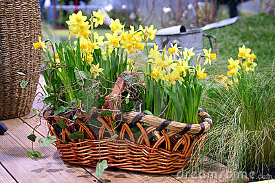 Spring flowers in the nature basket