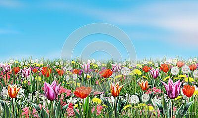 Spring flowers and sky