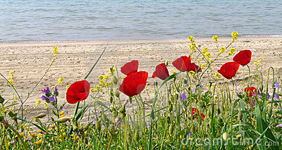 Spring flowers by sunny beach