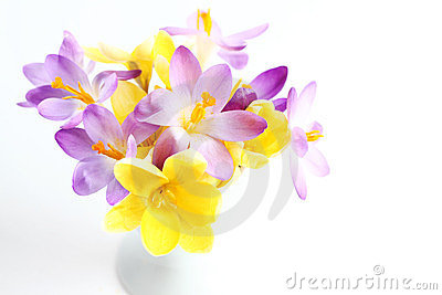 Spring flowers on white background