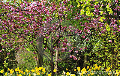 Spring foliage colours