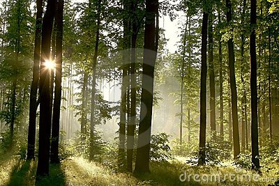 Spring forest with morning sunbeams