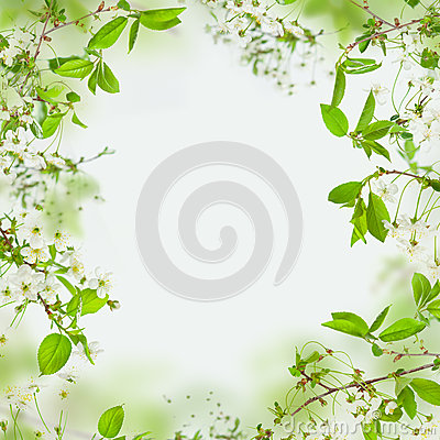 Free Spring Frame Of Flowers And Green Leaves Royalty Free Stock Photos - 28717708