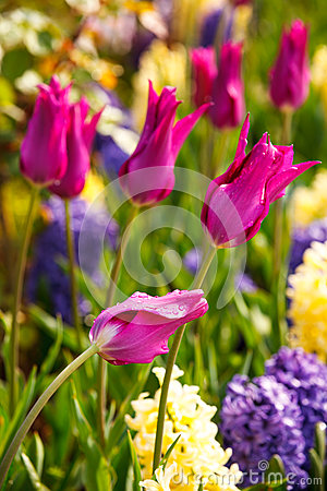 Free Spring Garden Flowers Stock Photography - 47178012