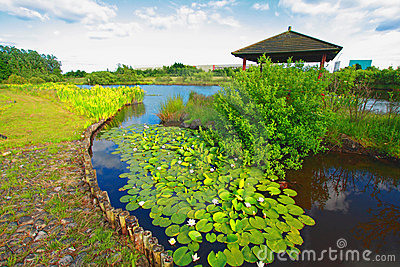 Spring garden with water lilies