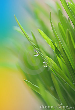 Free Spring Grass Stock Photography - 13365192