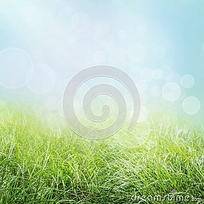 Free Spring Grass Stock Image - 19520891