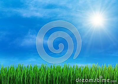 Spring grass and blue sky