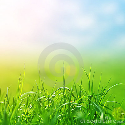Spring grass in sun light and defocused sky