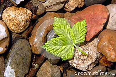 Spring Green Berry Leaf