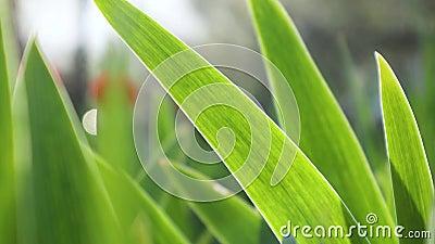 Spring green botany growth full HD nature video stock videobeelden
