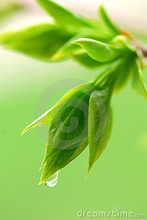 Free Spring Green Leaves Stock Photo - 2329700