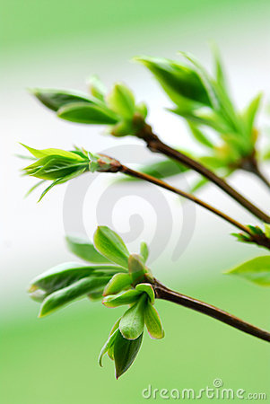 Free Spring Green Leaves Stock Photos - 2329703