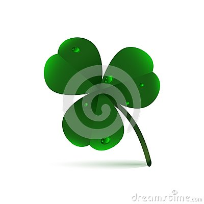 Spring green plant fhree-leafed clover with dew, raindrops or waterdrops on white background. St. Patrick`s day,, Saint, Patrick, Stock Photo