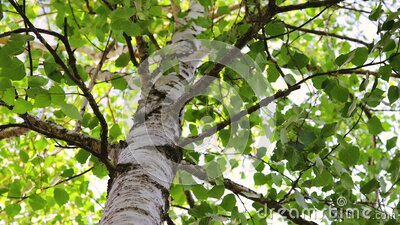 Green tree leaves and sun beams between branches. Relaxation in the forest. stock video