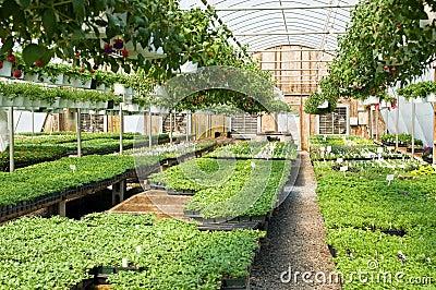 Spring greenhouse nursery