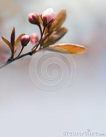 Spring header with pink buds.