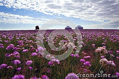 Spring of inner mongolia