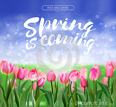 Free Spring Is Coming Lettering On Glade Of Pink Tulips Background. Spring Bright Nature Illustration. Vector EPS10. Stock Photography - 86310002