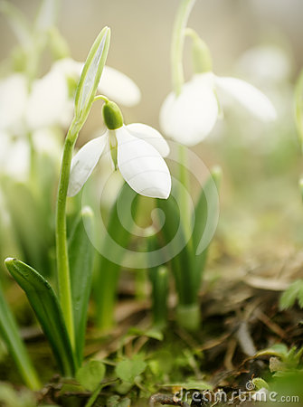 Free Spring Is Here! Stock Photography - 24453602