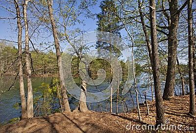 Spring on Lake Norman