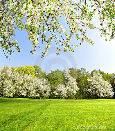 Free Spring Landscape Royalty Free Stock Photo - 22540125