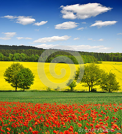 Free Spring Landscape Royalty Free Stock Photography - 30020347