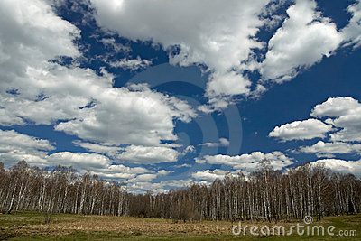 Spring landscape with birch forest, blue sky and  clouds.