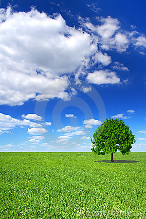 Spring landscape, green tree