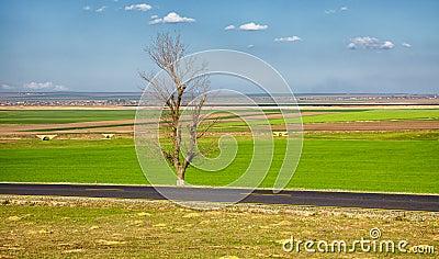 Spring landscape near Baia