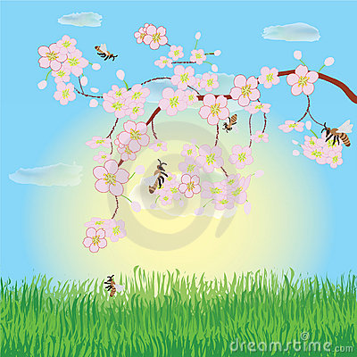 Free Spring Landscape With Blooming Cherry Stock Photos - 19170823